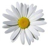 """Аромат – """"Парти-Бяло цвете"""""""